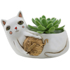 D 2022  White CAT with yarn planter