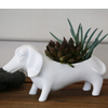 D 1831  White OSCAR planter