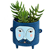 DB 1978 Baby Hairy JACK blue planter